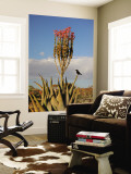 Blooming Aloe Littoralis Wall Mural by Uros Ravbar