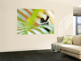 Rufous-Tailed Hummingbird (Amazilia Tzacatl) Sitting in Nest Wall Mural by Shannon Nace