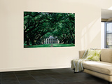 Oak Alley Plantation in Mississippi River Valley Wall Mural by John Elk III