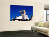 Cape Gannets at Colony Wall Mural by Frans Lemmens