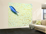 Blue Chromis Damselfish (Blue Chromis) Floating over Giant Brain Coral, Paradise Reef Wall Mural – Large by Dan Herrick