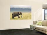 African Elephant (Loxodonta Africana) Wall Mural by Ariadne Van Zandbergen