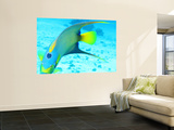 Queen Angelfish (Holacanthus Ciliaris), Paradise Reef Wall Mural by Dan Herrick