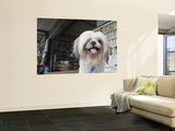 Pet Dog Wall Mural by Brent Winebrenner