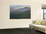 Country House in Middle of Olive Fields Wall Mural by Diego Lezama