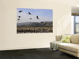 Cranes at Hula Lake, Upper Galilee Wall Mural by Hanan Isachar