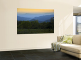 Looking Out over Forest-Covered Mountains in Evening Light Wall Mural by Mark Newman