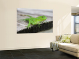 Green Iguana on Breakfast Table at Bucuti Beach Resort on Eagle Beach Wall Mural by Holger Leue