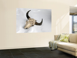 Buffalo Skull Wall Mural by Douglas Steakley