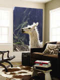 Llama (Lama Glama) Wall Mural by Brent Winebrenner