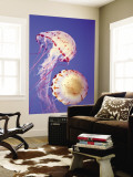 Jellyfish in Monterey Bay Aquarium Wall Mural by Douglas Steakley