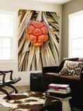 Fruit of Spiral Pandanus (Pandanus Spiralis), West Kimberley Wall Mural by Grant Dixon