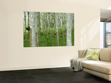 Rubber Trees Wall Mural by Austin Bush