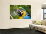 Macaw Wall Mural by Brian Cruickshank