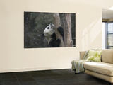 Giant Panda Cub Climbing Tree with Snow Falling Down Wall Mural by Keren Su