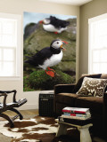 Two Puffins on Bird Cliffs of Snaefellsnes Peninsula Wall Mural by Douglas Steakley