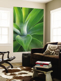 Green Succulent Plant at Botanical Gardens Wall Mural by Sabrina Dalbesio