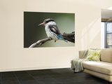 Striped Kingfisher (Halcyon Chelicuti) Wall Mural by Ariadne Van Zandbergen