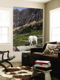 Mountain Goat (Oreamnos Americanus) Wall Mural by Mark Newman