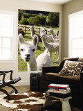 Alpacas on Farm Wall Mural by Rachel Lewis
