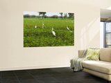 Yellow Waters Billabong with Water Birds Including Herons and Egrets Wall Mural by Paul Dymond