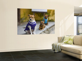 Dogs Wearing Outfits Wall Mural by Tony Burns