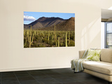 West Unit of Saguaro National Park Wall Mural by Mark Newman