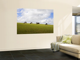Friesian Dairy Cows Grazing Wall Mural by Rodney Hyett