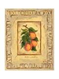 Italian Fruit Apricots Giclee Print by Marilyn Dunlap
