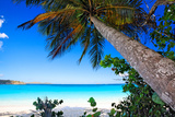 Palm Tree on Trunk Bay Beach, USVI Photographic Print by George Oze