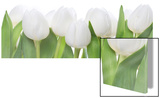 Tulip Parade Posters