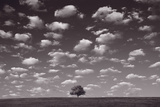 Lone Tree Morning In BW Photographic Print by Steve Gadomski