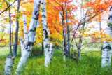 George Oze - Dreamy Autumn Birches - Fotografik Baskı