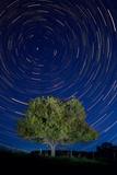Savanna Night Impressão fotográfica por Steve Gadomski