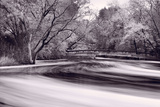 DuPage River Forest BW Photographic Print by Steve Gadomski