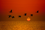 Sunrise Flight Photographic Print by Steve Gadomski