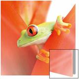 Crazy Frog II Plakater
