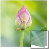 Lotus Bud Posters af Sara Deluca