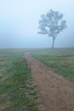 Into The Mist Photographic Print by Steve Gadomski