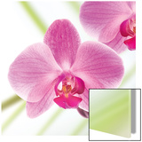 Pink Violet Affiche