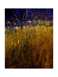 Blades Of Grass Photographic Print by Ruth Palmer