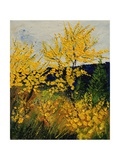 Brooms Shrubs Giclee Print by Ledent