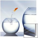Le saut en hauteur (du poisson rouge) Affiches