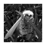 White Satin Moth Posters por Ruth Palmer
