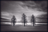 Three Trees Photographic Print by Steve Gadomski