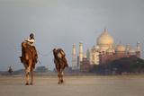 Taj Mahal Camels Photographic Print by Charles Bowman