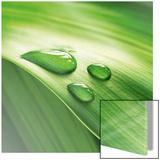 Epopée verte (feuilles & gouttes d'eau) Art
