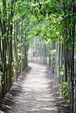Path in the Woods Photographic Print by George Oze
