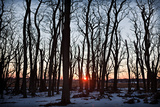 Winter Trees Impressão fotográfica por Steve Gadomski