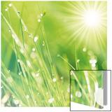 Lush Morning Grass Reprodukcje